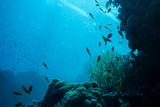 Underwater life landscape