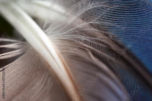 Aluminium Papegaai Rosella parrots blue and grey feathers