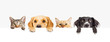 Leinwanddruck Bild - Dogs and Cats Peeking Over Web Banner