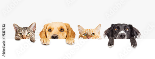 Leinwanddruck Bild Dogs and Cats Peeking Over Web Banner