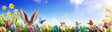 Easter - Bunny And Decorated Eggs In Flowery Field - 195254572