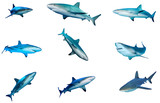 Collection of Sharks isolated. Caribbean Reef Shark cutouts