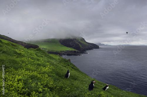 Foto op Plexiglas Donkergrijs Puffins - Faroe Islands