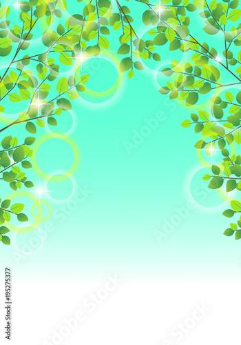 Foto op Canvas Groene koraal 背景 葉