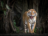 Sumatran tiger standing in a forest atmosphere. - 195283380