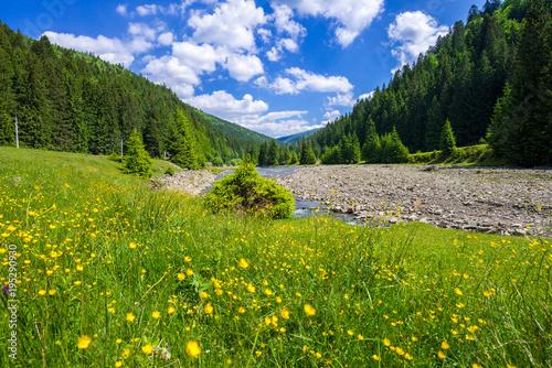 Fotobehang Bergrivier Spring in Ukraine in the mountains