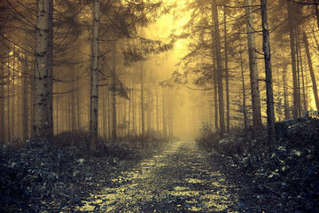 Fantasy orange foggy forest with mystic light. Color filter effect used. © robsonphoto