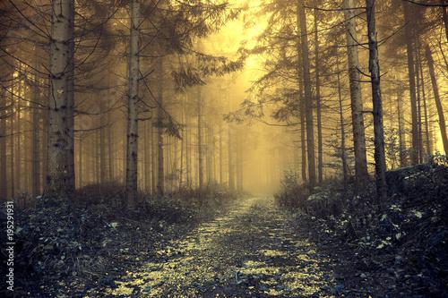 Fantazja pomarańczowy mgłowy las z tajemniczym światłem. Zastosowano efekt filtra koloru.
