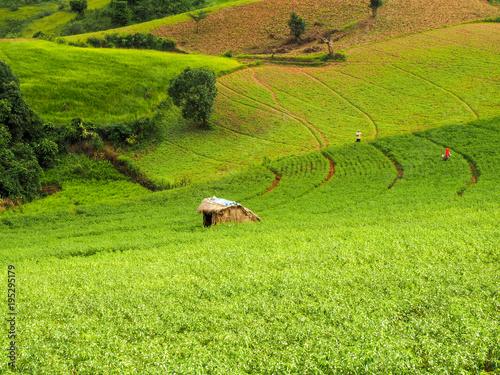 Fotobehang Pistache Lanscape Myanmar, agriculture