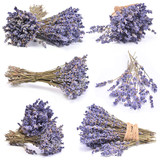 Lavender  collection - 195314775