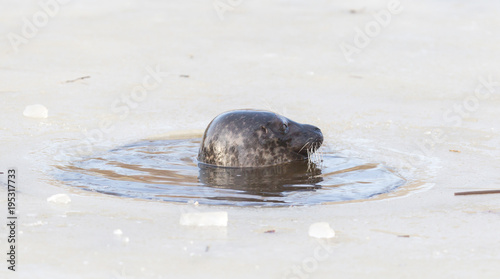 Aluminium Antarctica Seal breathing though a hole in the ice