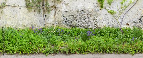 Tuinposter Baksteen muur Alte Mauer mit Mauerblümchen