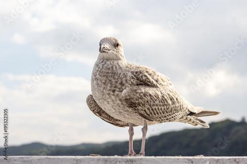 Foto op Canvas Natuur Closeup of seagull bird standing next to water