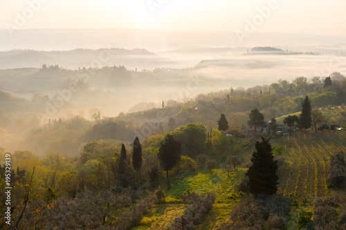 Deurstickers Wit Typical Tuscan landscape