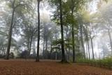 Buchenwald im Nebel,  Rombergpark, Dortmund, Nordrhein-Westfalen, Deutschland, Europa - 195329571