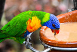 Colored Tropical Parrot