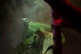iguana avvolta dal vapore della giungla tropicale - 195330318