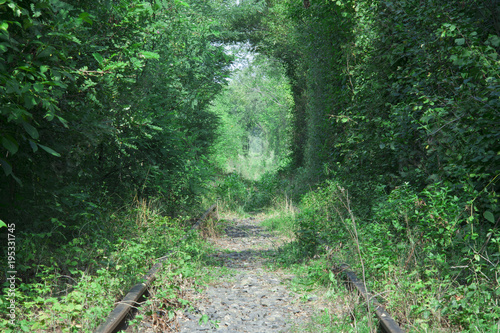 Foto op Canvas Olijf the tunnel of love in Romania, railroad crossing the forest