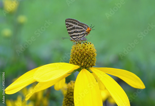 Aluminium Vlinder butterfly, flower, insect, nature, summer, macro, green, garden, animal, beauty, yellow, spring, colorful, fly, flowers, wing, orange, monarch, wildlife, color, fauna, wings, flora, bug, plant