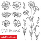 Vector set with outline Cornflower or Knapweed or Centaurea flower bunch, bud and leaf in black isolated on white background. Ornate Cornflower in contour style for summer design and coloring book.