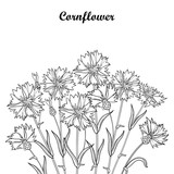 Vector bouquet with outline Cornflower or Knapweed or Centaurea flower, bud and leaf in black isolated on white background. Ornate contour Cornflower bunch for summer design and coloring book.