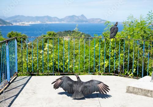 Vultures and guanabara bay view, Rio de Janeiro, Brazil