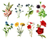 Vintage Colored Flower Illustrations - Hand Painted Illustrations of Flowers and Plants