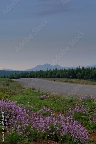 Fotobehang Lavendel altitude