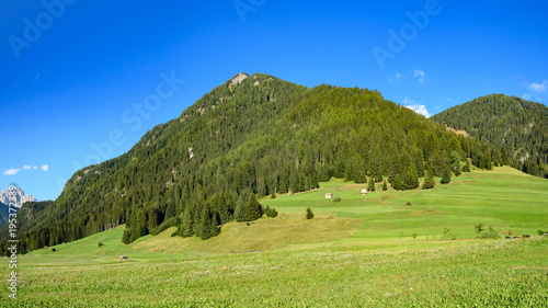 Keuken foto achterwand Pistache alpine meadow in the dolomites