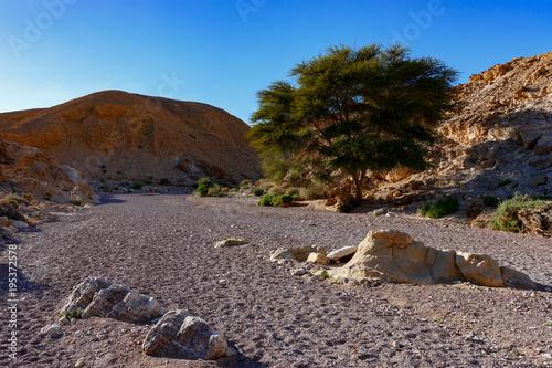 Foto op Canvas Chocoladebruin Red Canyon, Ejlat, Izrael