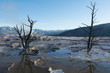 Waterfilled limestone terraces at Mammoth Hot Springs with some dead trees and the blue sky reflecting in the water