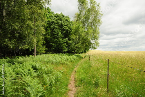 Keuken foto achterwand Pistache Beautiful green landscape with meadow, trees and sky