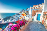 Santorini, Greece. Picturesq view of traditional cycladic Santorini houses on small street with flowers in foreground. Location: Oia village, Santorini, Greece. Vacations background. - 195383547