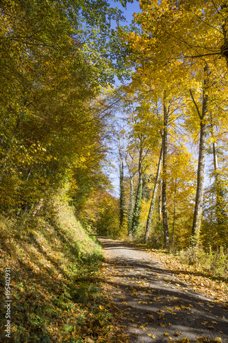 Plexiglas Weg in bos Forêt en automne