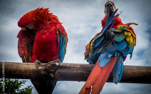Fototapeta Amazon Jungle Parrot