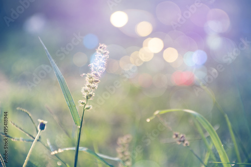 Aluminium Purper grass flower in autumn morning vintage grass flower field in nature background.