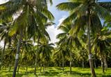 Coconut Field in Tahiti - 195435171