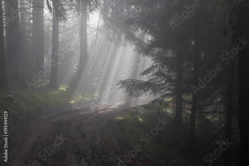 Magiczny las, drzewa we mgle, Vosges, Francja