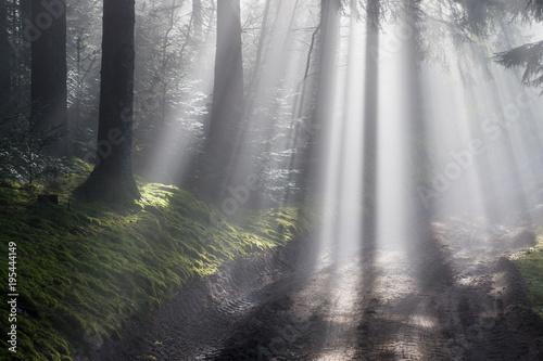 Magiczny las, drewno we mgle, Vosges, Francja