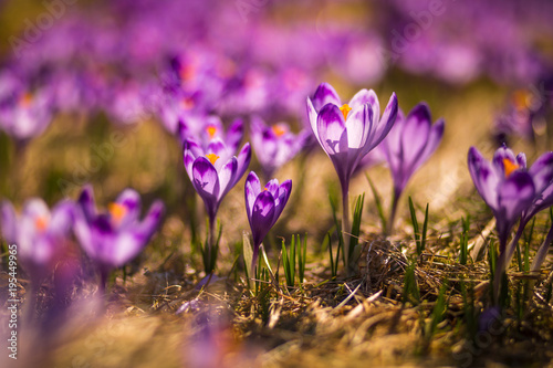 Foto op Canvas Natuur Spring in Tatra Mountains