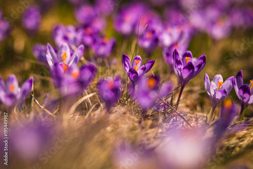 Tuinposter Natuur Spring in Tatra Mountains