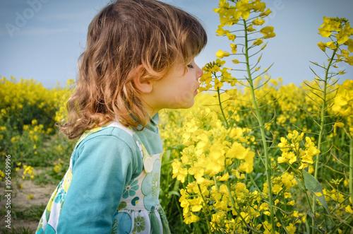 Fototapeta c'est la saison du colza
