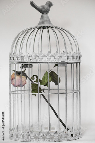 rose in birds cage