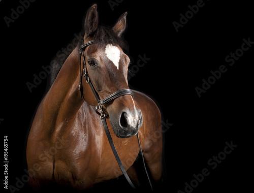 Fotobehang Paarden braunes Pferd vor schwarzer Hintergrund