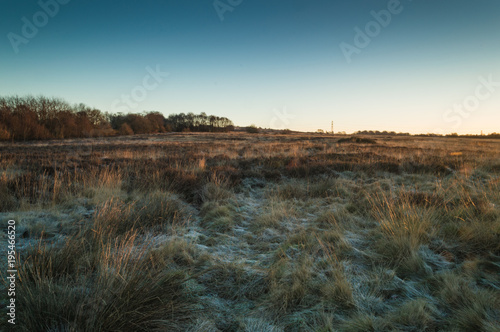 Foto op Canvas Natuur Golden dawn light breaks across the top of the grass on a frozen Wetley Moor in Staffordshire.