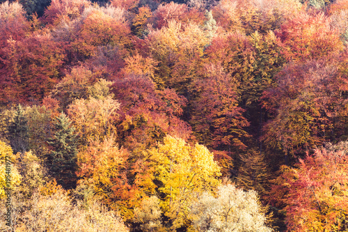 A lot of colorful trees with yellow, orange and red leaves, autumn abstract background © Bogdan