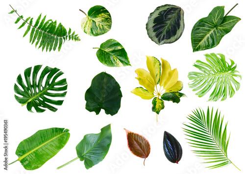 Foto Murales Tropical green leaves