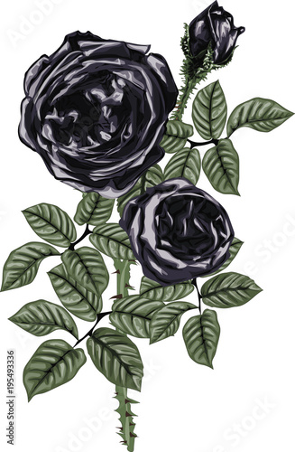 Black roses vector art - Bouquet of black roses - vintage art