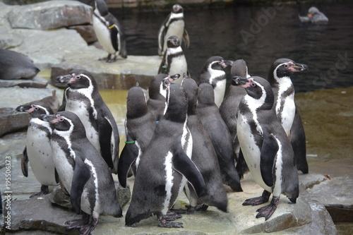 Foto op Aluminium Antarctica Pinguine