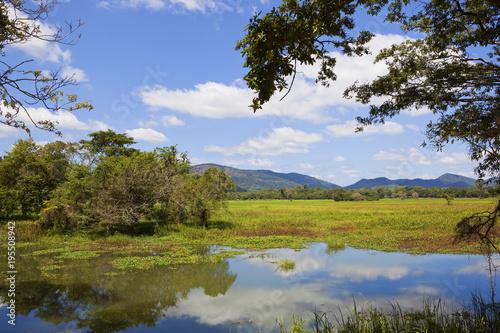 Foto op Canvas Natuur sri lankan scenery